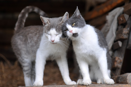 katzen kennenlernen fauchen