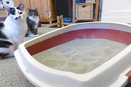 Kleines Katzenklo beratung katze berlin katzenpsychologin katzenverhalten